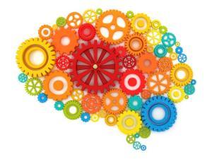 http://www.tcneuropsychology.com/Brain_Picture.jpg